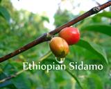 Sidamo - Ethiopian